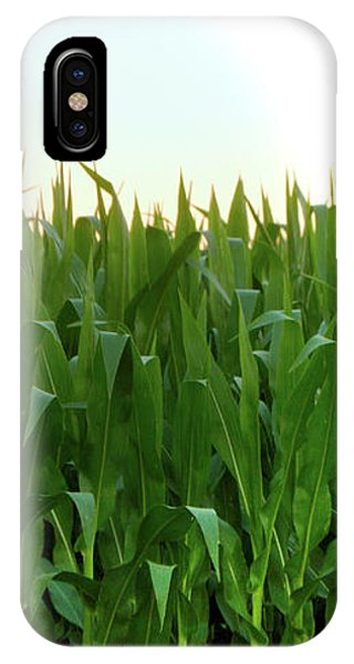 Corn Of July IPhone Case