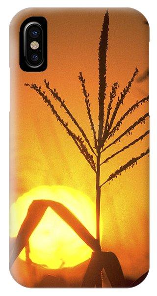 Cornfield Sunset IPhone Case