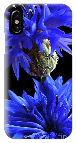 Cornflower Blues IPhone Case