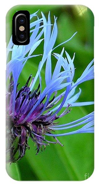 Cornflower Centaurea Montana IPhone Case