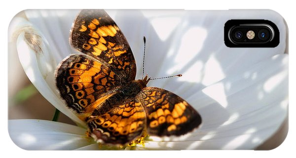 Pearl Crescent Butterfly On White Cosmo Flower IPhone Case