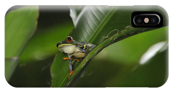 Costa Rica Red Eye Frog I IPhone Case