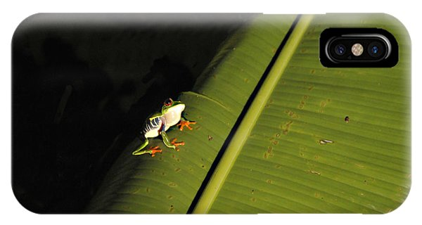 Costa Rica Red Eye Frog II IPhone Case
