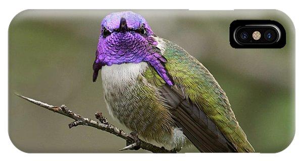 Costa's Hummingbird, Solano County California IPhone Case