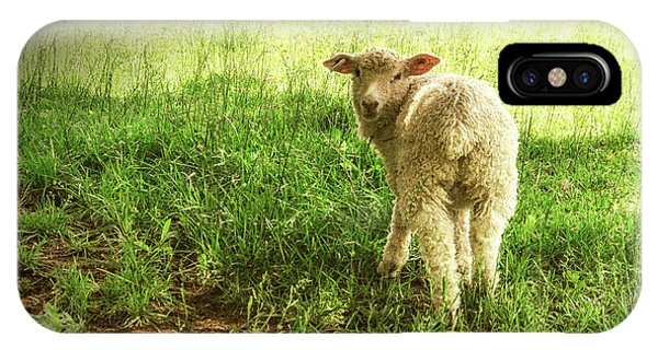Cotswold Sheep IPhone Case