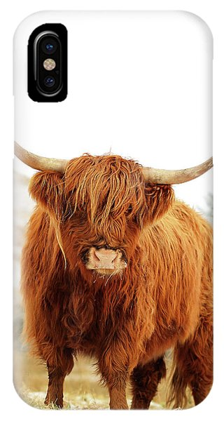 Bull Art iPhone Case - cottish Highland Cow Loch Lomond by Grant Glendinning