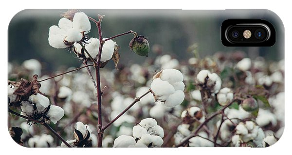Cotton Field 5 IPhone Case