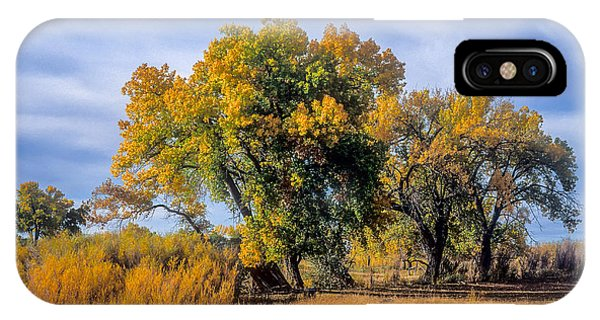 Cottonwood #1 Tree On Ranch Land In Colorado Fall Colors IPhone Case