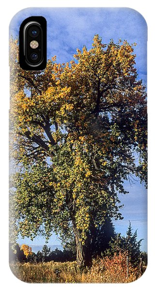 Cottonwood #3 Colorado Ranch Country In Fall IPhone Case