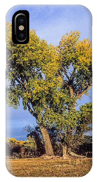 Cottonwood #4 Fall Ranch Colorado IPhone Case
