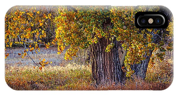Cottonwood #6 Fountain Creek, Colorado In Fall IPhone Case