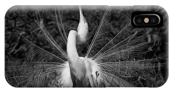 Great Egret Courtship Plumes IPhone Case