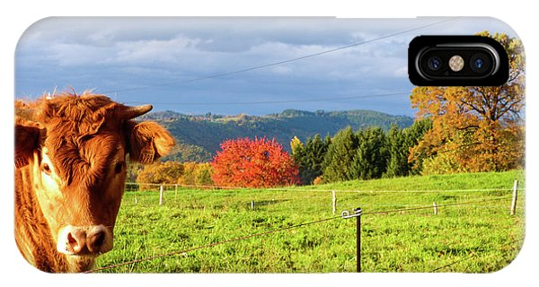 Cow And Autumn Colors  IPhone Case