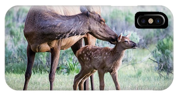 Cow And Calf Elk IPhone Case