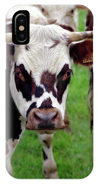 Cow Closeup IPhone Case