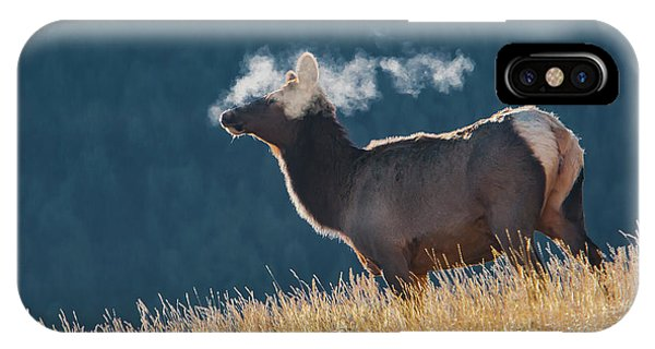 Cow Elk With Steamy Breath IPhone Case