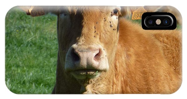 Cow Portrait IPhone Case