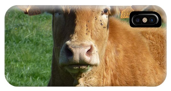 Cow Portrait IPhone Case