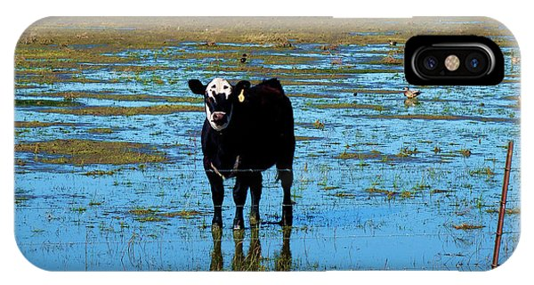 Middle Of Nowhere iPhone Case - Cow Puddle by Geoff and Lindsey Cormier