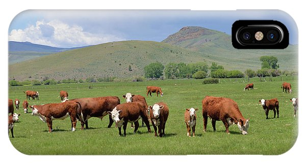 Cows And Calves IPhone Case