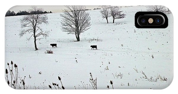 Cows And Thistles IPhone Case