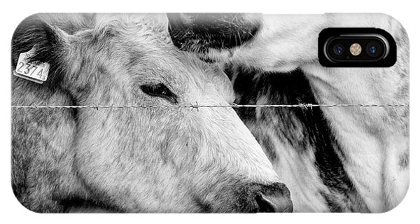 IPhone Case featuring the photograph Cows Behind Barbed Wire by Nick Biemans