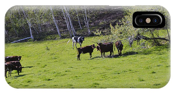 Cows In A Pasture IPhone Case