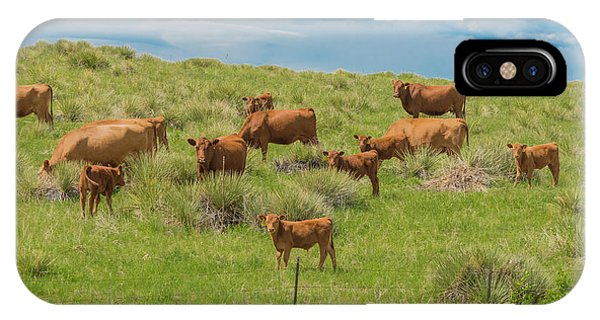 Cows In Field 1 IPhone Case