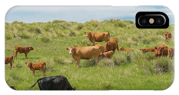 Cows In Field 3 IPhone Case