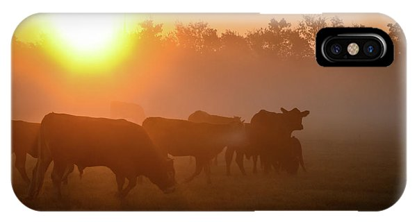 Cows In The Sunrise Mist IPhone Case