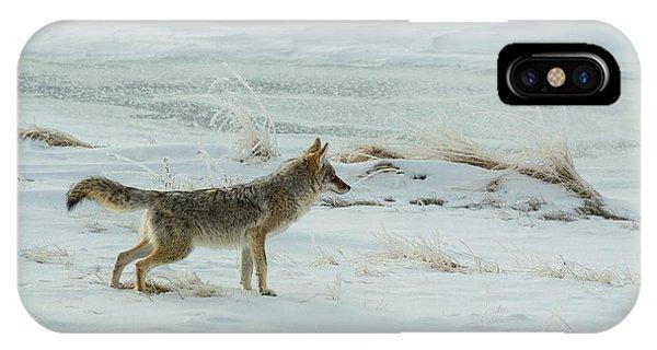 Coyote - 8962 IPhone Case