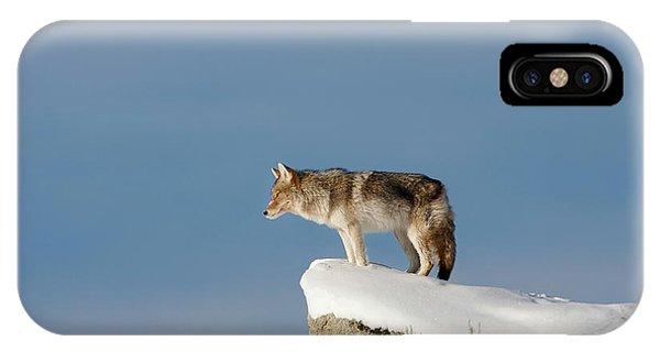 Coyote At Overlook IPhone Case