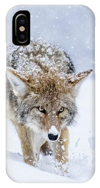 Coyote Coming Through IPhone Case