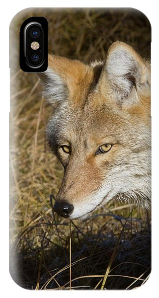 Coyote In The Wild IPhone Case