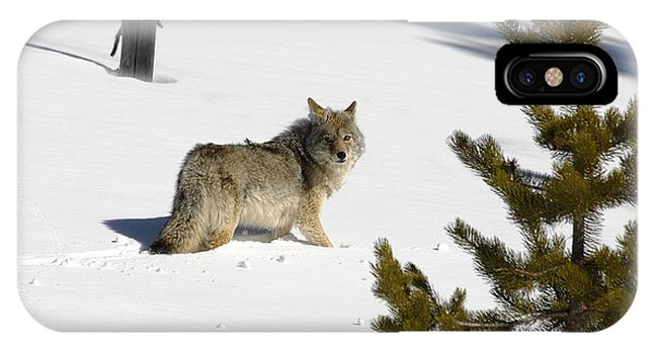 Coyote In Winter IPhone Case