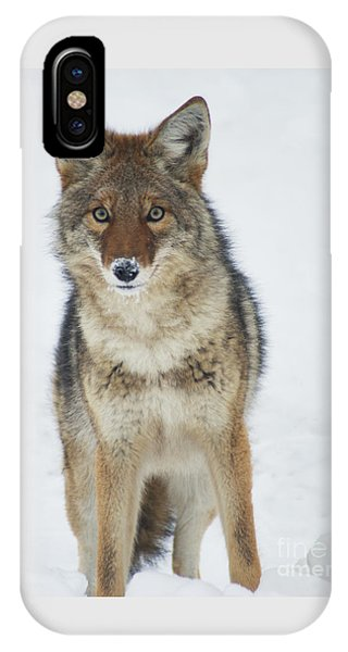 Coyote Looking At Me IPhone Case