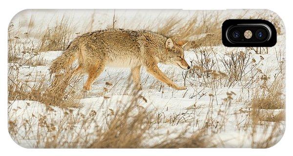 Coyote Stalk IPhone Case