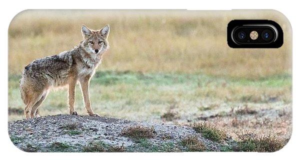 Coyotee IPhone Case