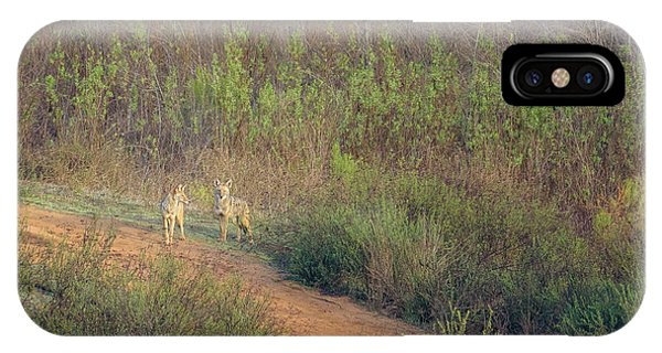 Coyotes In Morning Light IPhone Case