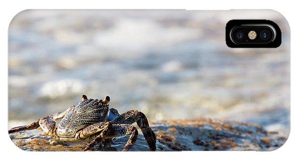Crab Looking For Food IPhone Case
