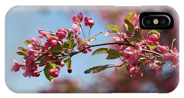 Crabapple In Spring Section 1 Of 4 IPhone Case