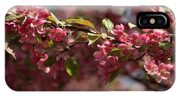 Crabapple In Spring Section 3 Of 4 IPhone Case