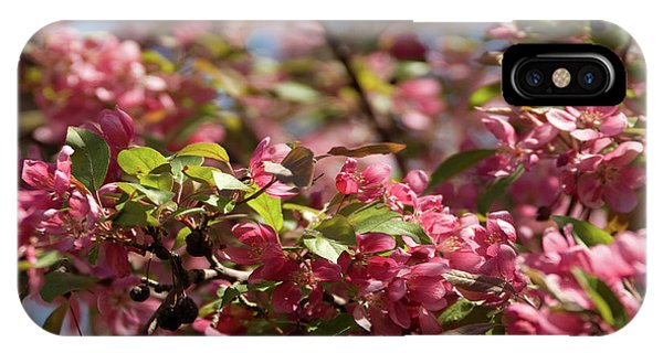 Crabapple In Spring Section 4 Of 4 IPhone Case