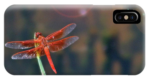 Crackerjack Dragonfly IPhone Case