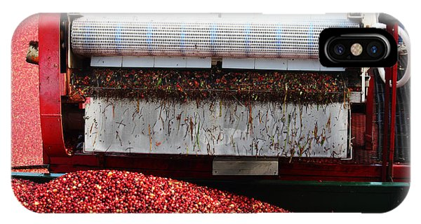 Cranberry Harvest IPhone Case