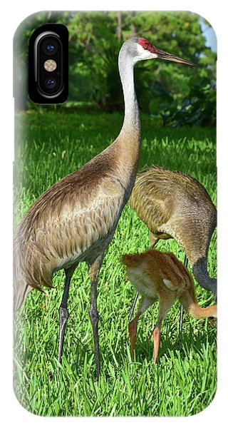 Crane Family Picnic IPhone Case