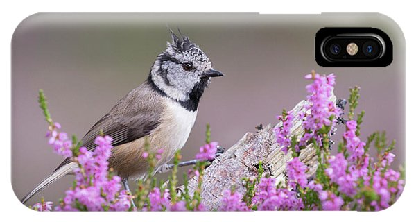 Crested Tit In Heather IPhone Case