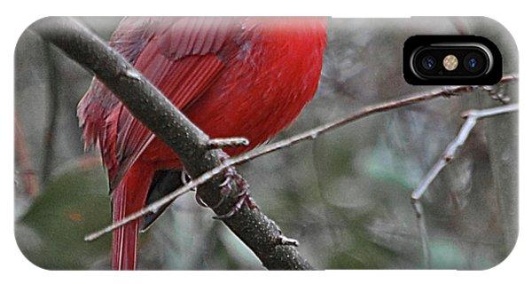 Crimson Cardinal IPhone Case