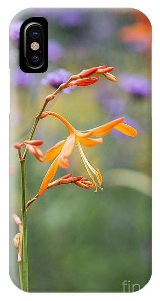 Golden Gardens iPhone Case - Crocosmia Golden Ballerina by Tim Gainey