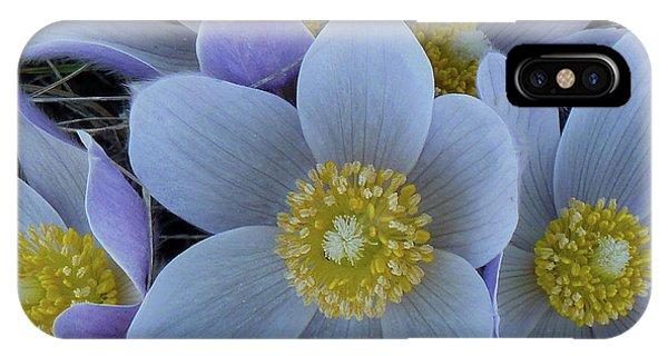 Crocus Blossoms IPhone Case